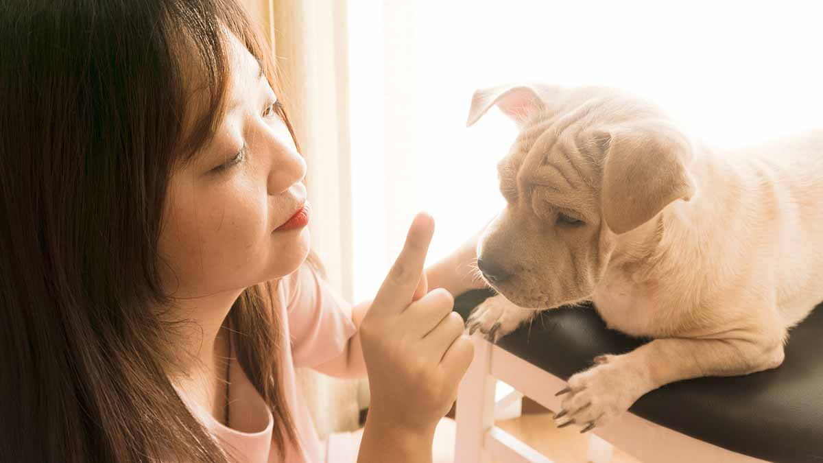 Things to Consider Before Getting a Dog For Your Apartment