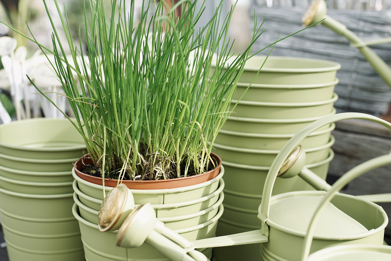 Great Herbs to Grow in Pots